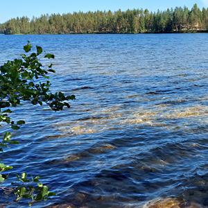 Järvi, taustalla näkyy metsää.