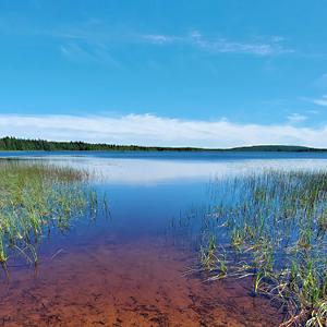 Järvi, taivas, vesikasvillisuutta ja rannan hiekkapohja.