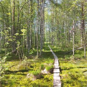 Pitkospuut kansallispuistossa